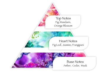 انواع نت های بویایی عطر